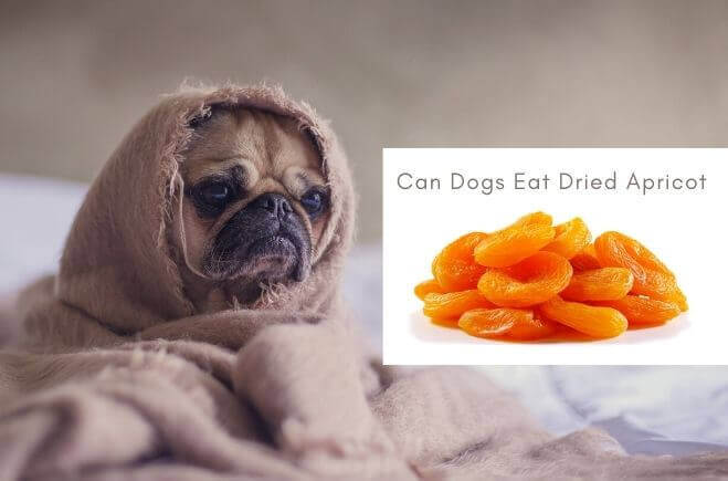Can Dogs Eat Dried Apricot