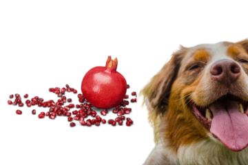 Can dogs eat pomegranate seeds