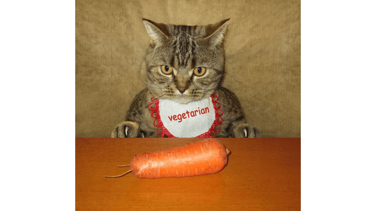 Cats Eat Carrots