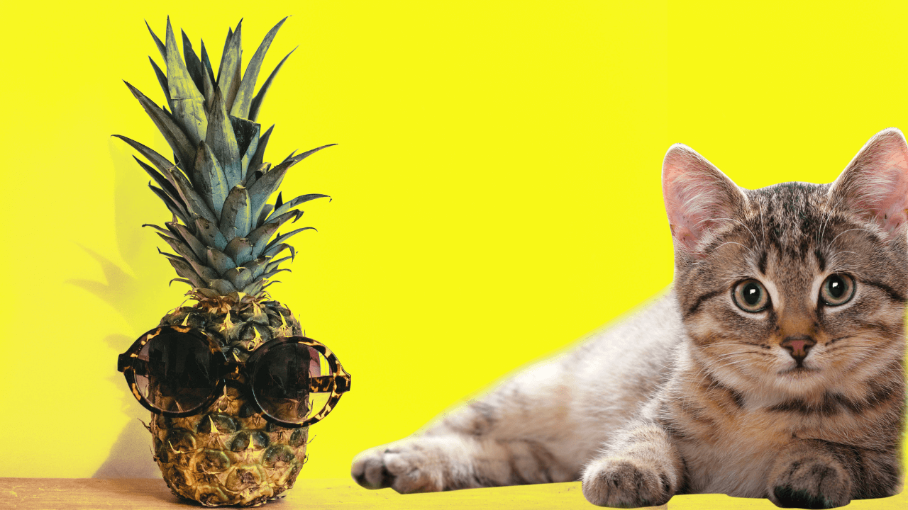 Can cats eat pineapple (3)