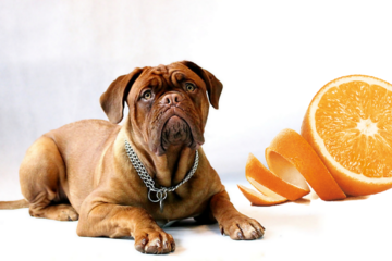 Can dogs eat orange peel?