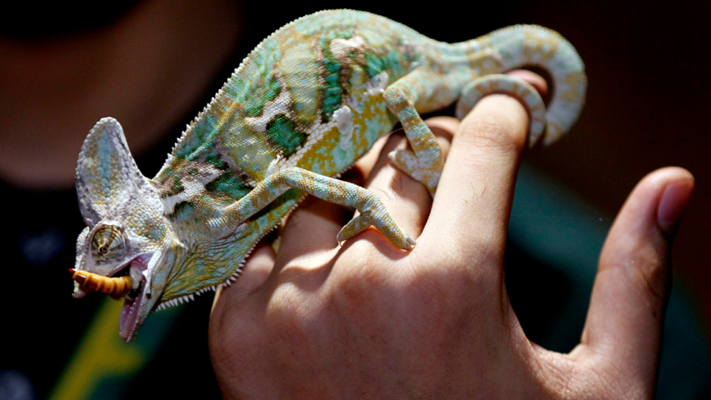 Tips for Taking Care of Your Pet Reptile