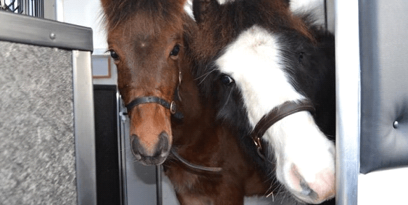 8 Common Horse Diseases That Caretakers Must Know