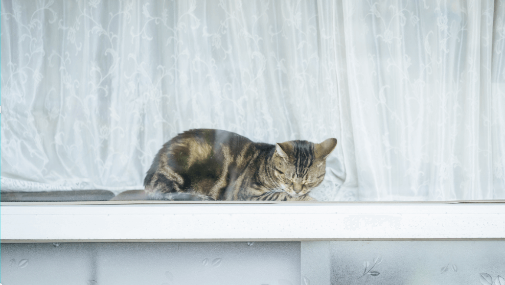 7 Best Ways to Keep Your Cat Safe From Open Window