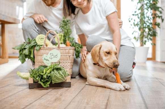 Healthy Foods to Keep Your Dog Fit