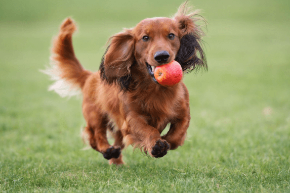 health foods for dog